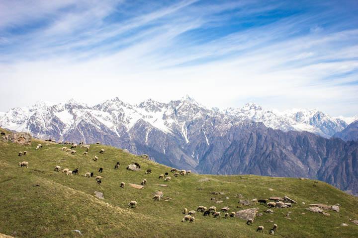 Trek_Indian_Himalaya_3