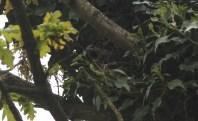 female on the nest