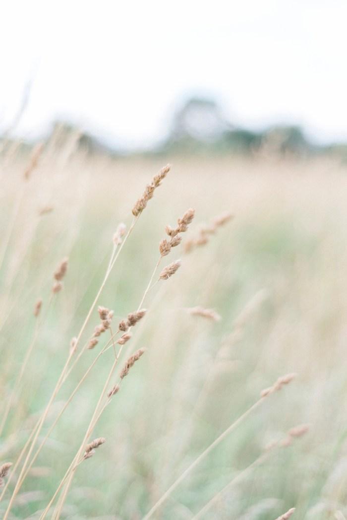 grass field Dayton photographer