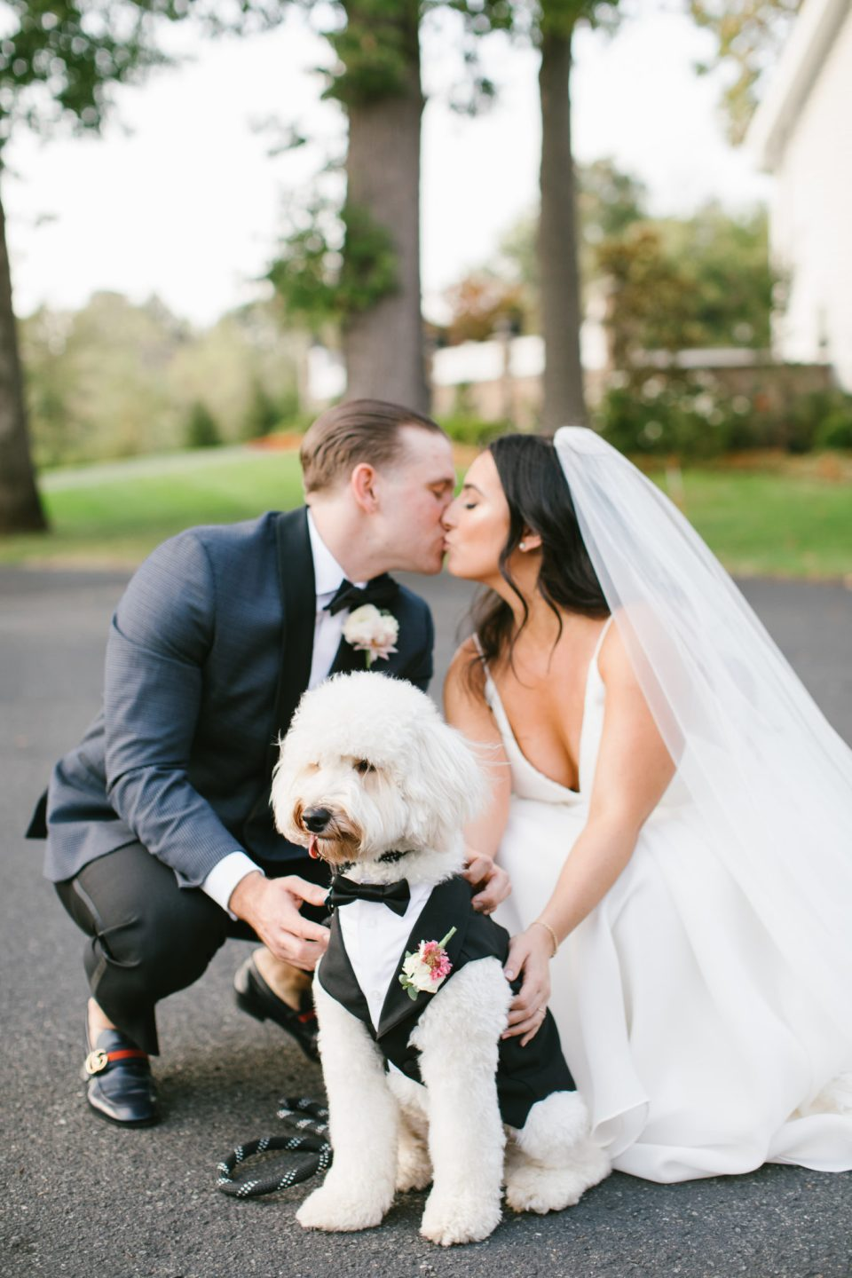 dog ring bearer photographed by Ashley Mac Photographs at Ryland Inn