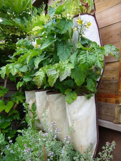 Garden Blog Trend Alert! Shoebag Gardens