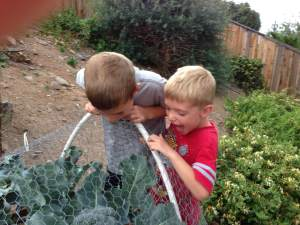 The garden is a classroom where children make scientific discoveries about how seeds sprout, plants grow and where our food comes from. Photo by Master Gardener Kathy Williams.