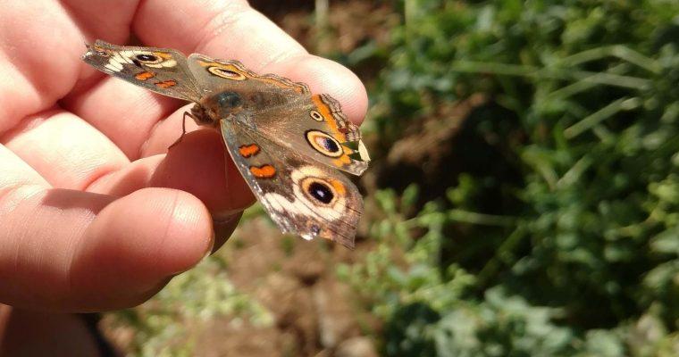 Providing a Pollinator-Friendly Habitat