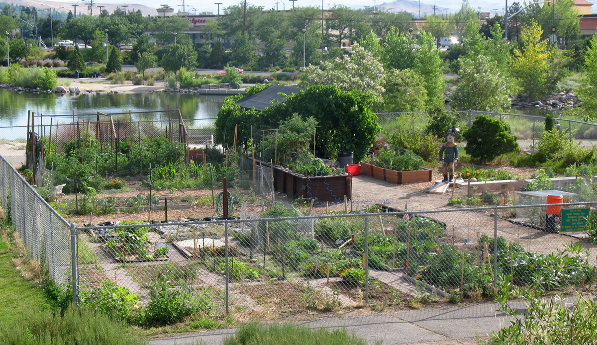 Community Gardening Makes Reno Bloom