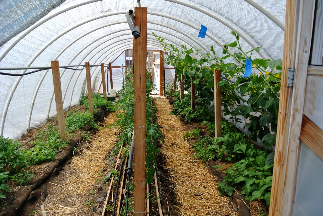 Hoop house with green plants growing inside