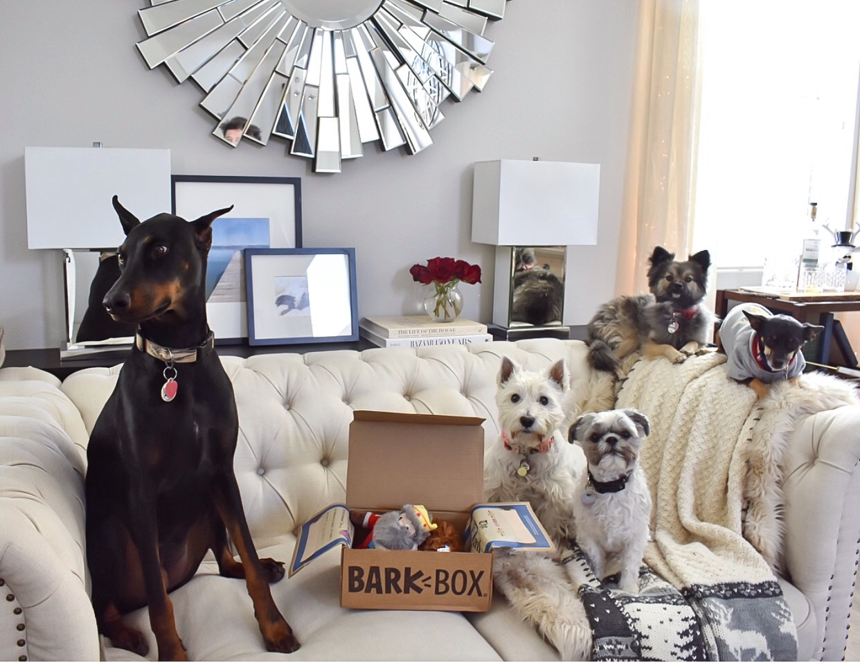 Ashley Nicole Interiors Fur Babies