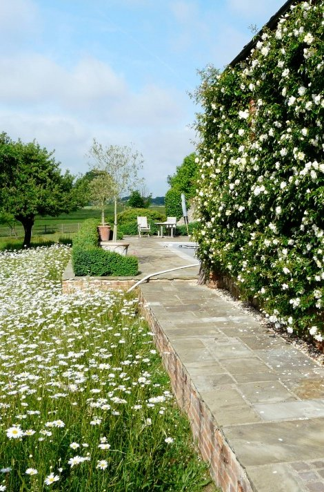 rose garden ideas pinterest