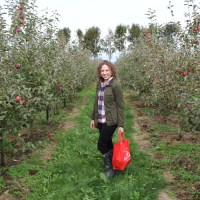 apple picking at Taves Family Farm