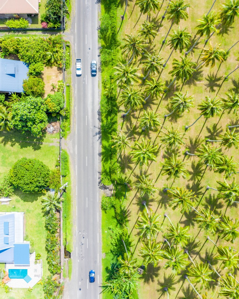 drone image of palm trees from the island of tahiti