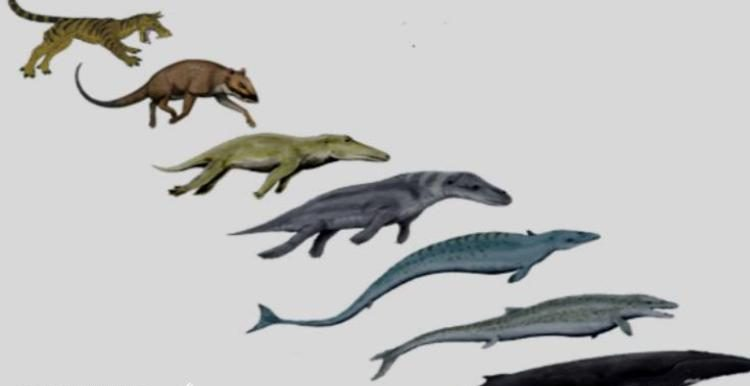 چند سوال از تکامل گرایان