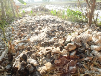 The waste produced by the mushroom farm.