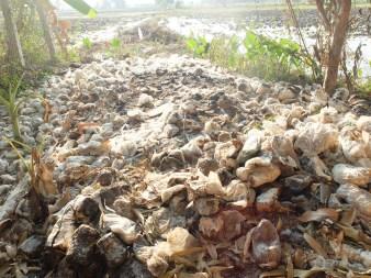 The waste produced by the mushroom farm.