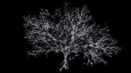 "Rohini Devasher. ""Arboreal"" Still from Video, Single Channel Video, 15 min. 2011"