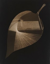 'Leaf and Prism' (1938) by György Kepes