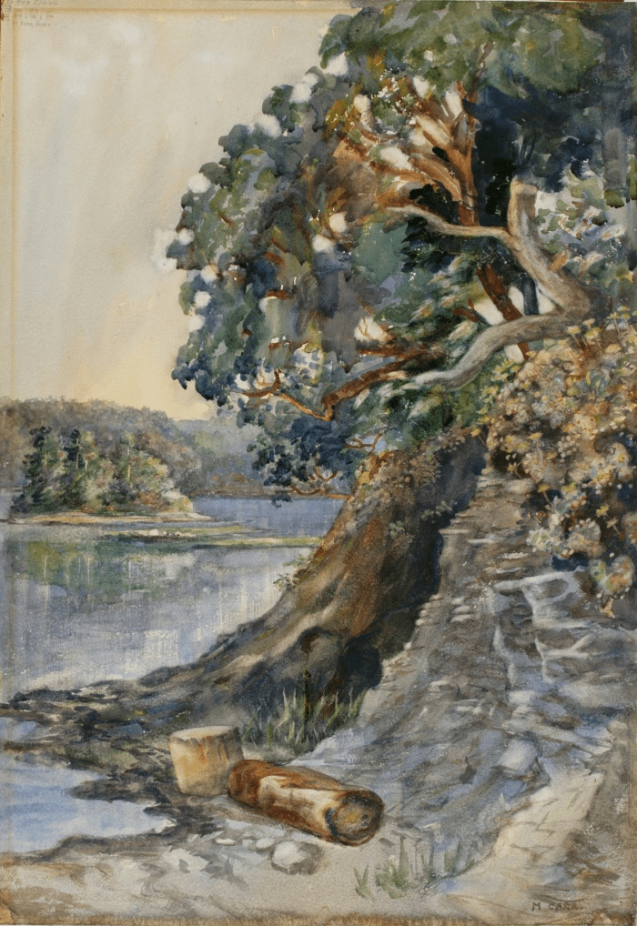 Arbutus Tree c. 1909. Photograph: Art Gallery of Greater Victoria
