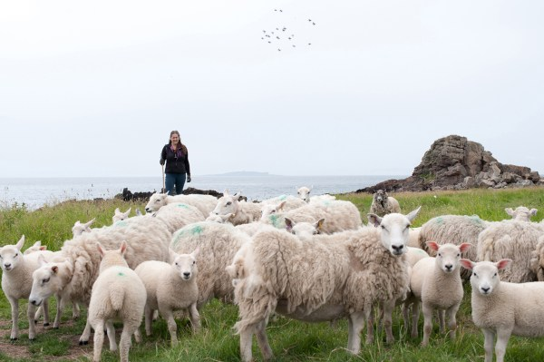 Laura Cunningham, conservation shepherd, The Flying Flock, Kilminning Coast Wildlife Reserve, Fife, Scotland 2013. Photo: Alicia Bruce (http://www.aliciabruce.co.uk/projects/fleece-to-fibre/)