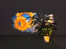 Overlapping Shadow Oversleeping, 2014. Video installation; one-channel projection on a Spathiphyllum, plant pot, silent. Dimensions variable