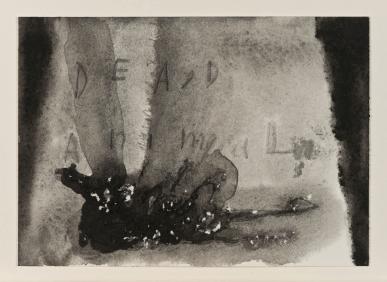 Dead Animal, 2005. Watercolour, 12 1/2 x 14 1/4 x 1 3/4 inches