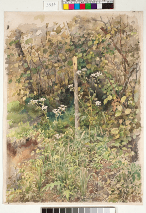 Уголок леса / Forest corner, c 1883. Watercolour on paper, 34.2 x 24.7 cm