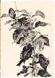 Houseplant , 1999. Sumi ink on paper, 60 x 42 cm