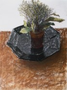 Thyme and Laurel, 1996. Pastel on paper, 40 x 29.9 cm