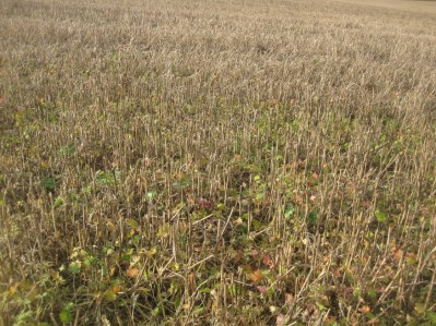 WHITSTUBBLE, Whitchurch, Hampshire, October 2015