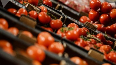 Photo of الزراعة العراقية تناشد باستيراد الطماطم من دول غير إيران بعد بلوغ سعر الكيلو 3آلاف دينار