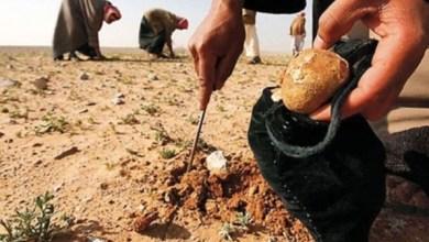 Photo of العثور على 9 جثامين جامعي الكمأ في الانبار