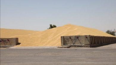 Photo of التجارة :  تعلن ايقاف تسويق الحنطة في خمس مراكز تسويقية في نينوى