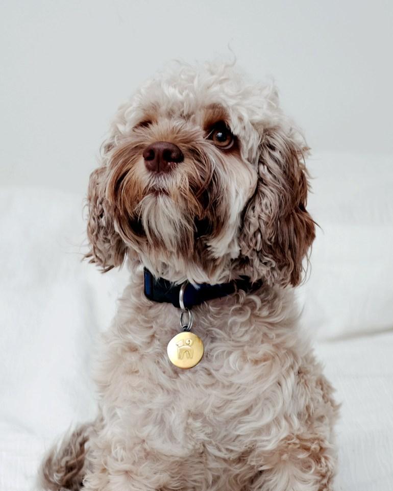 K9-Dog-Collar-1.3
