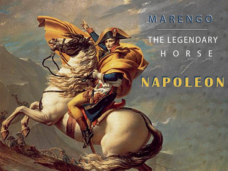MARENGO – THE LEGENDARY HORSE OF NAPOLEON