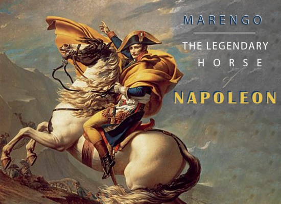 MARENGO – THE LEGENDARY HORSE OF NAPOLEON