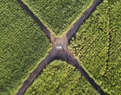 Drone Mauritius - Mare D'Albert Sugar Cane Fields