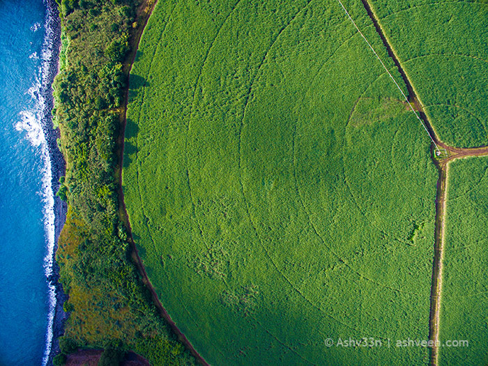 Drone Mauritius - Medine Sugar Cane Fields