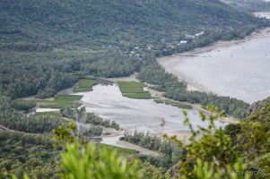 Hiking Le Morne Mountain - Mangrove Plantations