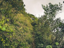 Hiking Pieter Both Mountain Mauritius - The Final Track