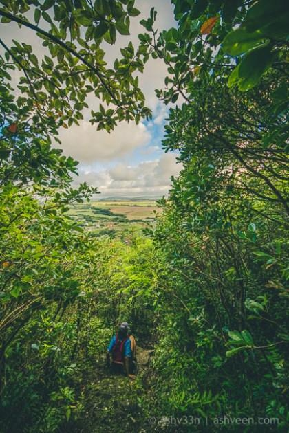 Hiking Pieter Both Mountain Mauritius - Climbing Down
