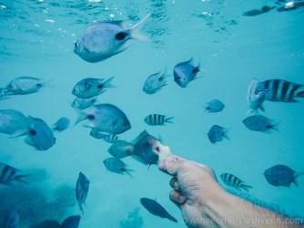 Instameet Mauritius IDDC WWIM14 - Feeding the Fish
