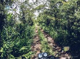 A Visit to Kanaka Crater - Through Vegetations