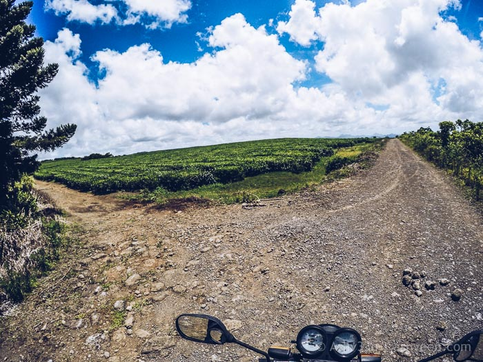 A Visit to Kanaka Crater - Turn Left Through Tea Fields