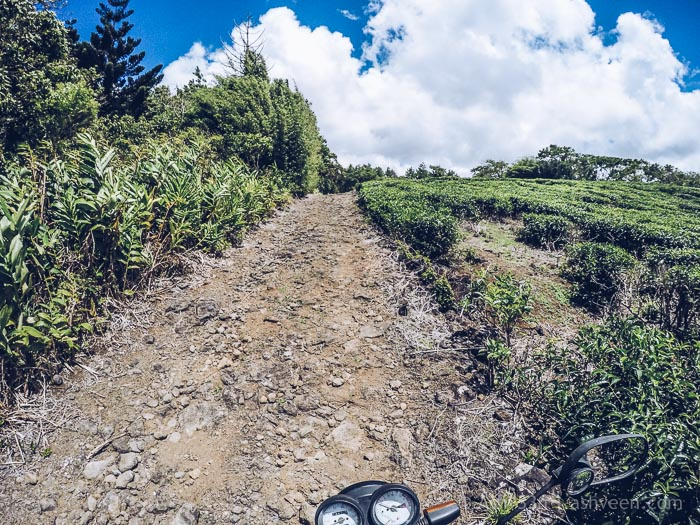 A Visit to Kanaka Crater - Straight Through Tea Fields