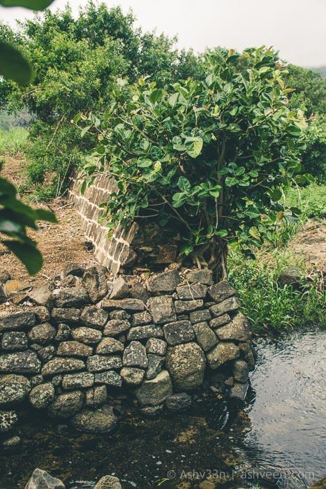 MTB Mauritius - Beau Songes - Charles Baudelaire Memorial