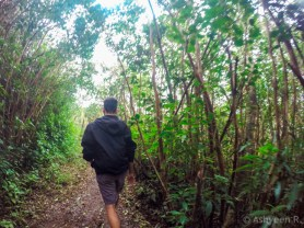 Hiking Piton de la Petite Riviere Noire