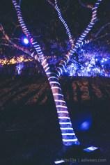 Porlwi by Nature - Citadel - Street Neon Tree