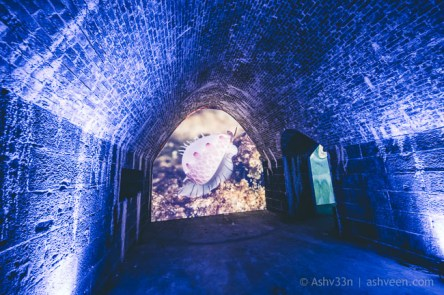 Porlwi by Nature - Citadel - Inner Tunnels - Marine
