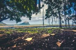 Road Trip Case Noyale Gris Gris Mauritius