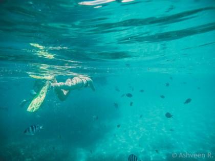 Snorkeling Blue Bay Marine Park