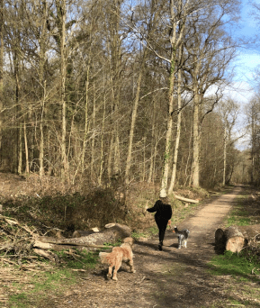 Walking the dogs through the woods