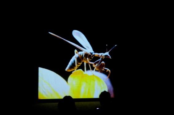 150529-DSC_0433-TEDx