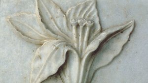 detail of a flower from a relief